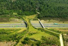Ecoductos, puentes que salvan animales  A través de Equilátero Desenvolvemento Sostible Consultores