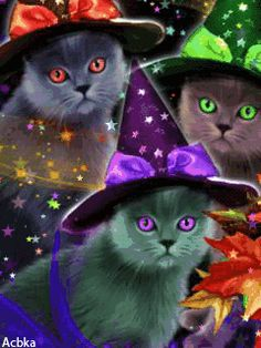 From Halloween Cottage. 3 Cats ready for Halloween! Retro Halloween, Halloween Gif, Halloween Prints, Halloween Pictures, Holidays Halloween, Happy Halloween, Magic Cat, Witch Cat, Animation