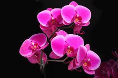 Схема вышивки «Ветка орхидеи» - Вышивка крестом