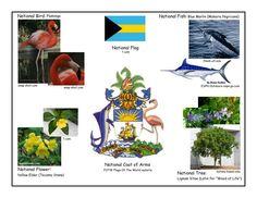 Printable Flag Of Bahamas Coloring Page Printable