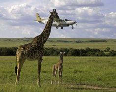 Я же обещала тебе остановить самолет.