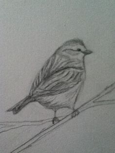 How to Draw+a+Bird - wish I had this for Draw a Bird Day!