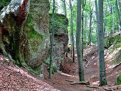 Fák,erdők,parkok.Elbi blogja: Dobogókő: Zsivány-körút Hungary, Trip Advisor, Marvel, Plants, Blog, Beautiful, Dune, Blogging, Plant