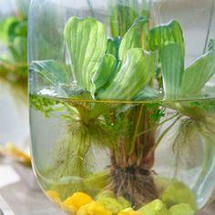 De mini-vijver, ideaal voor tuin en thuis - Intratuin