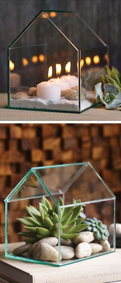 greenhouse terrarium I glass house #succulents #cactus #airplants
