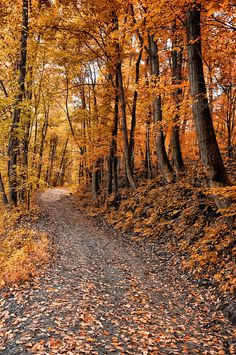Ramble On by Bill Cannon ✮ Ramble On Isnt this where Frodo, Sam, Merry and Pippin left the road to hide from the black rider? Autumn Scenes, Autumn Aesthetic, All Nature, Autumn Nature, Seasons Of The Year, Foto Art, Autumn Photography, Fall Pictures, Autumn Leaves