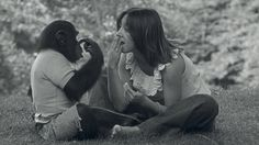 'Project Nim': A Chimp Learns, And Humans Don't on NPR