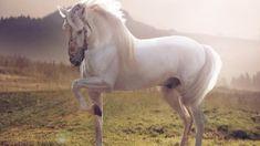Photographic Print: White Horse by conrado : Pretty Horses, Horse Love, Beautiful Horses, Animals Beautiful, Cute Animals, Majestic Horse, White Arabian Horse, White Horses, Horse Wallpaper