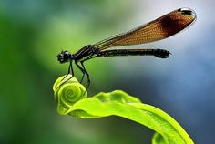 rare nature   Rare moments of nature  