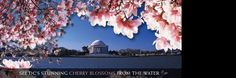 DC Cherry Blossom Cruises on the Potomac - Odyssey Washington