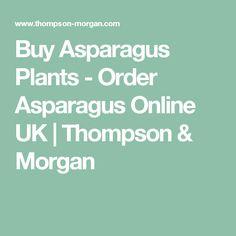 Buy Asparagus Plants - Order Asparagus Online UK   Thompson & Morgan