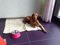 BISAZO dog having a break during our first photo shoot. #behindthescenes #jewelry #animal