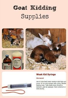 Goat Kidding Supplies via Better Hens and Gardens. Goats shown are Nigerian Dwarf goats.