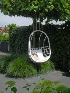Hanging chair Because you are never too old to enjoy a tree swing!