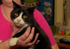This cat was missing for over 8 years, and was reunited with his family thanks to a microchip!