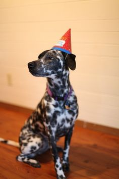 It's Freddie's 1st birthday on Thursday. I am looking forward to putting a hat on him.