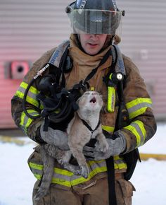 Cat after being saved from a fire...