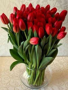 New Flowers Red Tulips Ideas Red Tulips, Tulips Flowers, All Flowers, My Flower, Pretty Flowers, Spring Flowers, Planting Flowers, Tulip Bouquet, Flower Images