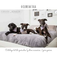 2016 Catálogo O Clube da Tula. www.oclubedatula.com