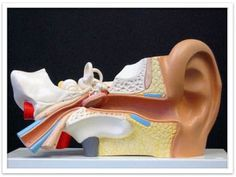 VESTIBULAR THERAPY  Vestibular rehabilitation is an effective treatment for vertigo/dizziness, motion sensitivity, and balance disorders. Studies have shown vestibular rehabilitation to be 90% effective in many patients. It is a conservative, non-invasive, drug free option for patients with these disorders.