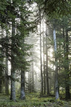 Forest...so peaceful.