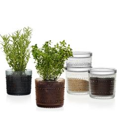 Kastehelmi storage jars,  by Iittala with stackable lids, beautiful storage for everywhere in the hone or serving up nibble, dips & more, as you can see they make great plant pots too!!!