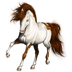 Magestic, Riding Horse Gypsy Vanner Liver chestnut Tobiano # - Howrse