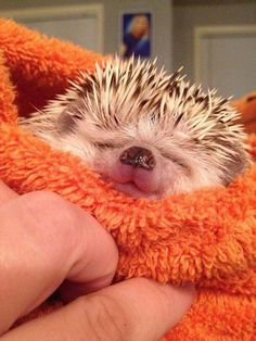 I love that little hedgehog nose!