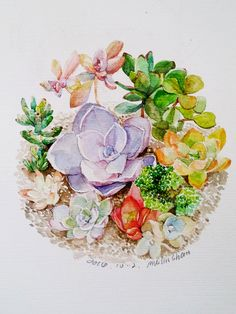 succulents by mulinshan