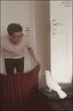 Cockatoo Reacts To The Fluff Challenge