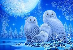 My Little Angels - Snow Owls by Kentaro Nishino