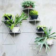 These Geometric Shelves Turn Your Plants Into a Chic Art Installation | Martha Stewart Living - Love the look of vertical gardens but not sure how to create one? These modular plant shelves are making it easy for gardeners to bring stylish greenery to their walls. The hardest part will be deciding how to arrange your favorite plants! #gardening #urbangarden #gardenideas