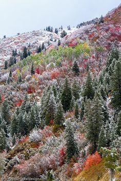 Dusting of Snow on Big Cottonwood Canyon, Utah