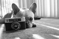 Más tamaños | Auggie and a camera | Flickr: ¡Intercambio de fotos!