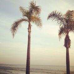 beach#holidays#palmtree#sunny <3