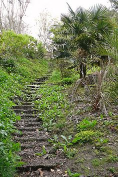 Steps at St Piran's Well