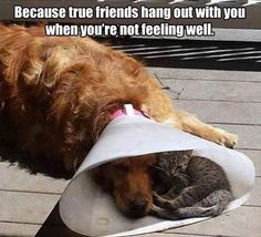 Because true friends hang out with you when you're not feeling well.