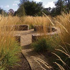 """Calamagrostis x acutiflora """"Karl Foerster"""" - Feuerstelle im Garten Modern Landscaping, Landscaping Tips, Garden Landscaping, Landscape Architecture, Landscape Design, Garden Design, Australian Native Garden, Terrazo, Prairie Garden"""