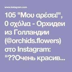 """105 """"Μου αρέσει!"""", 0 σχόλια - Орхидеи из Голландии (@orchids.flowers) στο Instagram: """"❤️Очень красивая!!!❤️Растет 2ая веточка. Номер 38 📍2 ветки-275грн 📍Высота 75 см, цветы 8 см ⠀ 🍃Фото…"""" Orchids, Flowers, Instagram, Royal Icing Flowers, Flower, Florals, Floral, Orchid, Blossoms"""