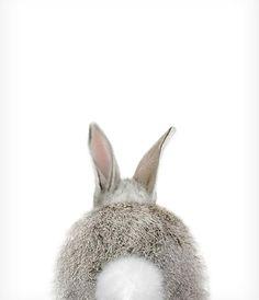 Rabbit tail print Bunny Animal print Baby rabbit Woodland Nursery decor Animal art Baby animals Nursery wall art The Crown Prints Cute Baby Animals, Animals And Pets, Funny Animals, Zoo Animals, Lapin Art, Baby Animal Nursery, Rabbit Art, Woodland Nursery Decor, Forest Nursery