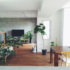 n_____ieさんの、北欧,ウンベラータ,モルタル,グリーン,無垢の床,無印良品,観葉植物,リノベーション,壁掛けテレビ,シンプルライフ,部屋全体,のお部屋写真