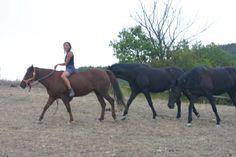 cavalli estate montagna