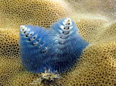 Picture of a Christmas tree worm -- one of the best photos from the Census of Marine Life, which concluded Monday after finding more than 6,000 new species.