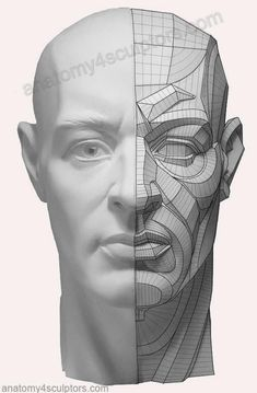 Drawing Anatomy Reference The right side is a fairly complex topographical description of the structures. The breakdown describes plane directional changes as well as light effects. Facial Anatomy, Head Anatomy, Human Anatomy Drawing, Anatomy Poses, Anatomy Study, Anatomy Art, Anatomy Reference, Anatomy Of The Face, Art Reference