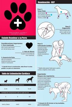 Here are some helpful First Aid tips for Dogs. Your help . - Here are some helpful First Aid tips for Dogs. Your help can save a life! Dog Care Tips, Pet Care, Pet Dogs, Dog Cat, Animals And Pets, Cute Animals, Diy Stuffed Animals, Pet Health, Pet Shop