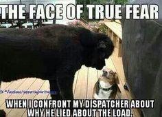 Face of true fear Show Trucks, Big Rig Trucks, Truckers Girlfriend, Trucker Quotes, Country Trucks, Mens Trucker Hat, Truck Memes, Freight Truck, Custom Big Rigs