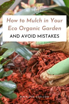 Organic Gardening Supplies Needed For Newbies Mulching In Your Garden, Lawn, Or In Clay Pots Is One Of The Easiest Ways To Care For Your Soil So Your Plants Can Thrive. Here's How To Mulch In Your Eco Organic Garden And Avoid Mistakes. Organic Mulch, Organic Gardening, Vegetable Gardening, Gardening For Beginners, Gardening Tips, Types Of Mulch, Outdoor Flowers, Garden Maintenance, Mediterranean Garden