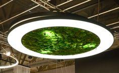 Sattler | Luce Verde | LED #Nature #Pendant #Light #Directlighting #LED #Sattler Plant Lighting, Backyard Lighting, Bar Lighting, Upside Down Plants, Moss Graffiti, Deco Led, Moss Art, Minimalist Garden, Classic Garden