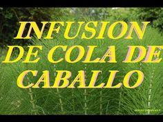 Infusión De Cola De Caballo Para La Huerta //Destacados //Fertilizantes ...