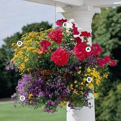 Hanging Baskets A. Geranium (Pelargonium 'Designer Cherry') -- 1 B. Swan river daisy (Brachyscome iberidifolia 'Mini Yellow') -- 1 C. Nirembergia 'Purple Robe' -- 3 D. Marigold (Tagetes 'Lemon Gem') -- 3 E. Hanging Flower Baskets, Hanging Planters, Container Plants, Container Gardening, Better Homes And Gardens, Geraniums, Dream Garden, Lawn And Garden, Garden Inspiration